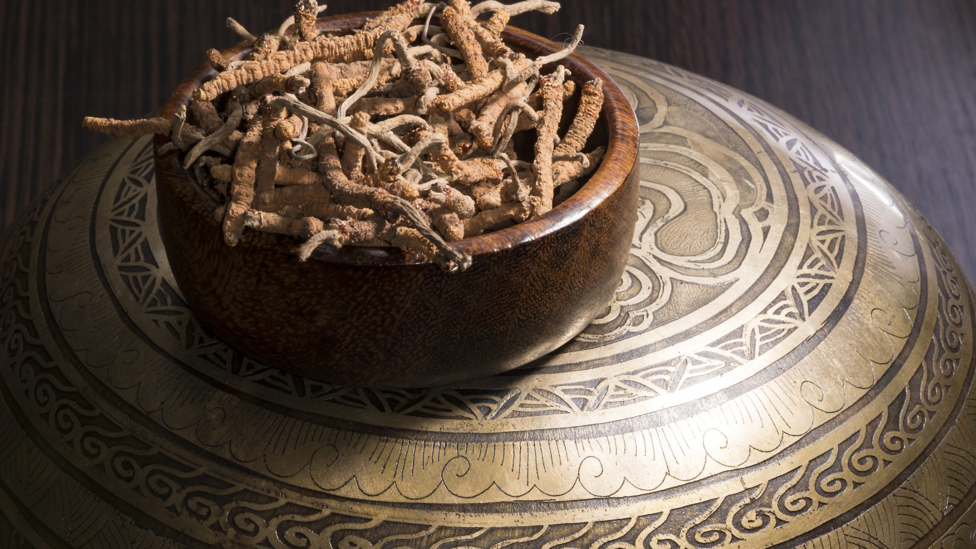 Cordyceps – What Are They?